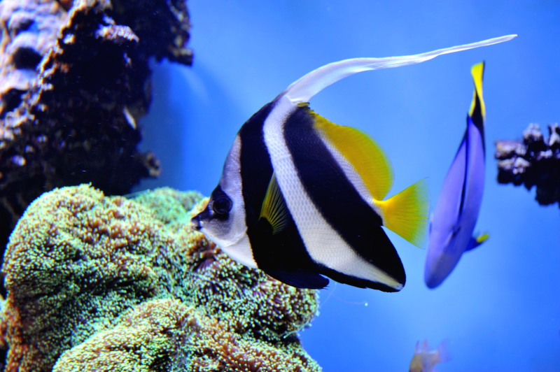 Saltwater Tropical Fish Saltwater Fish The Black And