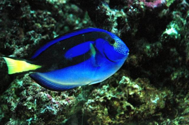 tropical fish gallery tropical fish are fun